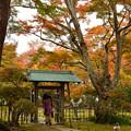 Photos: もみじ園