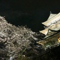 小田原城と夜桜2