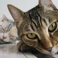 Photos: ドアップ猫
