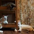子猫コミュニティ@てしま旅館