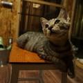 見つめる猫@てしま旅館