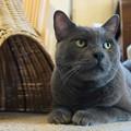 写真: いかつかわいい猫