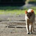 写真: 目つきが鋭い猫