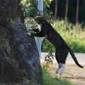 写真: ジャンプ猫