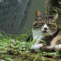 写真: 石碑と猫