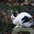 写真: 森の中のみけ猫