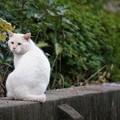 写真: 公園のノラ猫