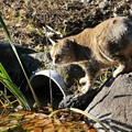 Photos: 池のほとりの猫