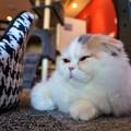 Photos: 遠い目の猫