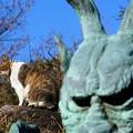写真: 龍神様と猫