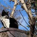 写真: 御神木に登る猫
