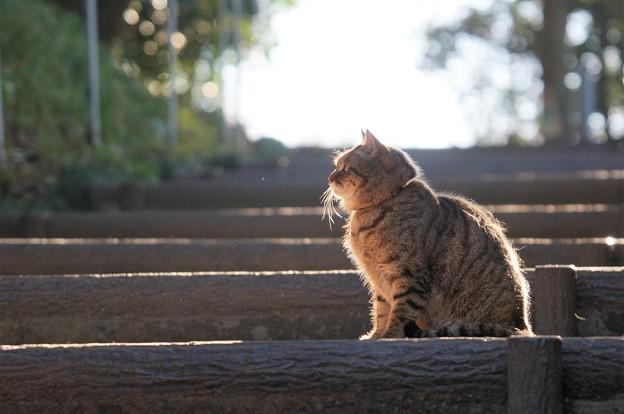 写真: 階段猫