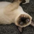 不思議な目の猫