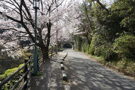 2015年3月30日 西公園 桜 福岡 さくら 写真 (72)