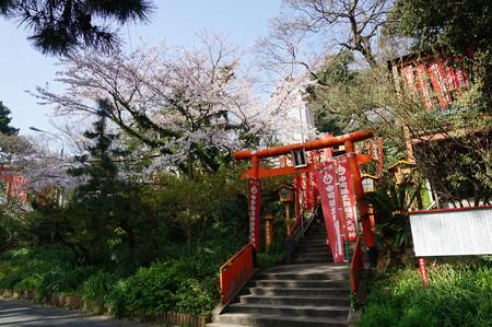 2015年3月30日 西公園 桜 福岡 さくら 写真 (90)