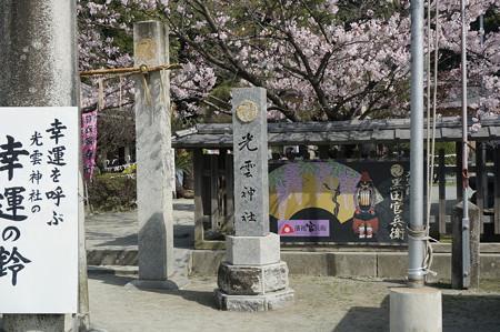 2015年3月30日 西公園 桜 福岡 さくら 写真 (109)