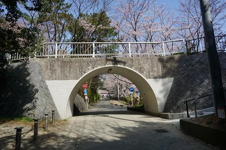 2015年3月30日 西公園 桜 福岡 さくら 写真 (119)