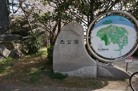 2015年3月30日 西公園 桜 福岡 さくら 写真 (145)