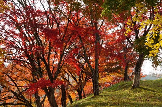 吉野山の紅葉_5