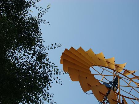 万博公園 2010-6-12