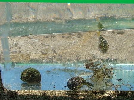 2010-8-4 加太の海