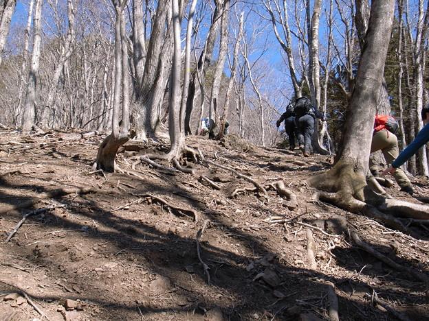 日本の山 西上州の山 高反山 根張りが美しいです