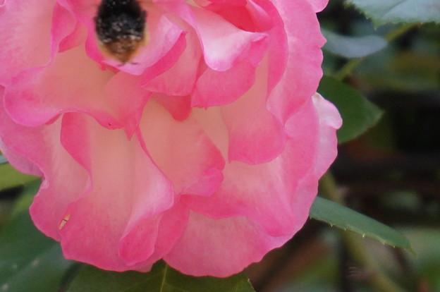 お尻に花粉が
