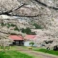 牧場に春の訪れ