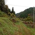 Photos: ボンゼン山は左