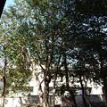 人見稲荷神社のヤブツバキ