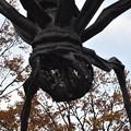 六本木ヒルズの前の蜘蛛のオブジェ