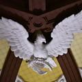 東京駅南口ドーム内の鳩