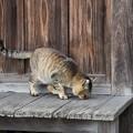 写真: お寺にいた猫
