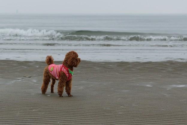 浜に佇むチャチャ