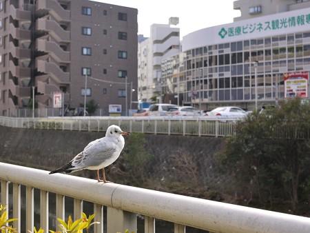 町田駅前の・・・カモメ!?
