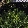 屋根と緑20160907