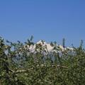 Photos: リンゴ園に・・・