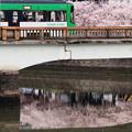 Photos: 桜橋