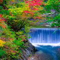 鳴子峡 紅葉