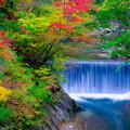 Photos: 鳴子峡 紅葉