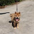 Photos: 笑顔の子犬