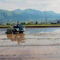 Photos: 阿蘇五岳に植える