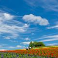 写真: 彩りの畑