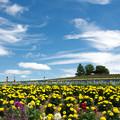 写真: 雲の誘い