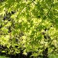Photos: Green