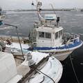 写真: お正月休みの羅臼港