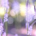 写真: 明るい林
