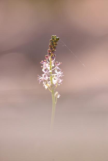 写真: しなり~頭を引っ張る蜘蛛の糸~