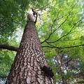 岡本静嘉堂緑地 (2)