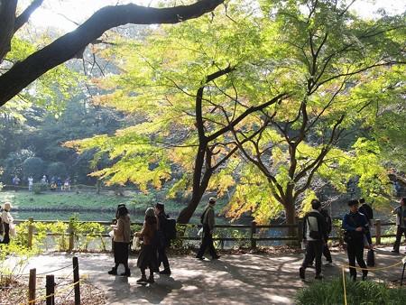 日立中央研庭園 (37)